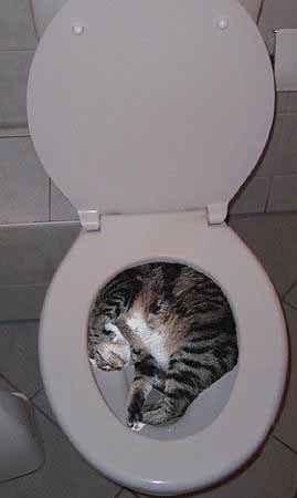 flushing_cat.jpg