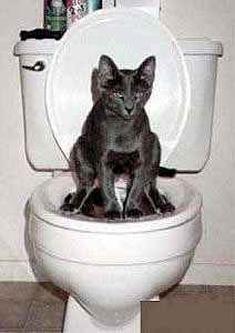 private_commode_cat.jpg