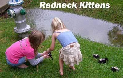 redneck_kittens.jpg