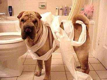 toilet_paper_dog.jpg