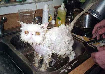 wet_cat.jpg